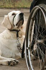 Psy asystujące